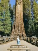 Work and Travel - Sequoia National Park